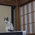 Photos: みみちゃん、久しぶり。