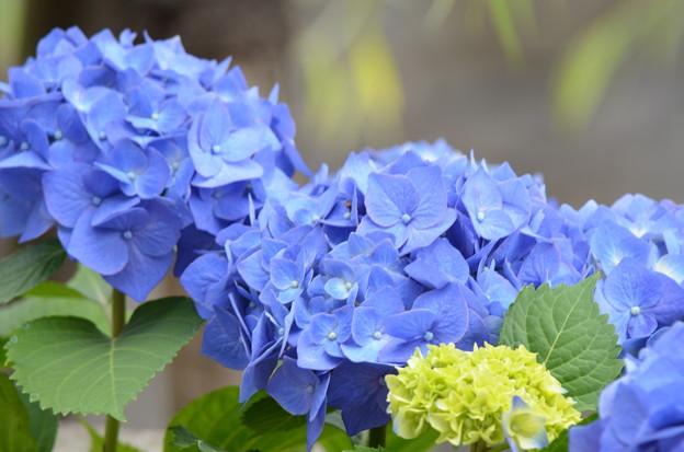 Photos: 青き瞳。