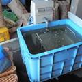 種籾の温湯消毒 60℃で10分