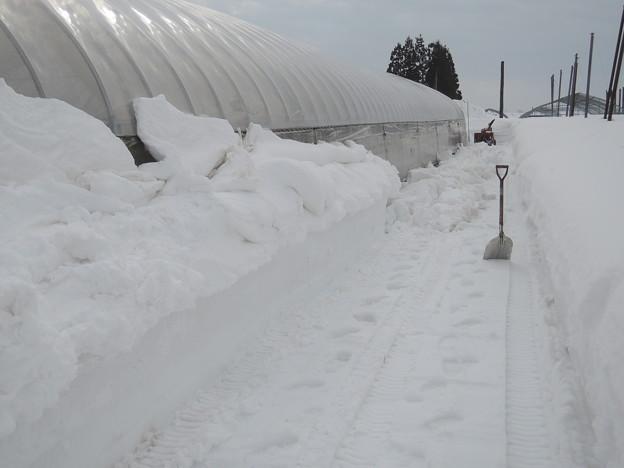 ビニールハウスの除雪