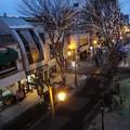 写真: 2月1日のパセオ通りイルミネーション