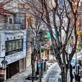 写真: 昼のパセオ通り