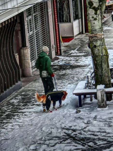 雪靴を履いた犬