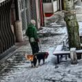 写真: 雪靴を履いた犬