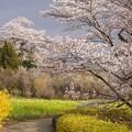 花見山の入り口