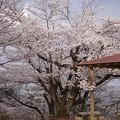 写真: 花見山の山頂