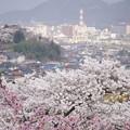 写真: 桜と信夫山