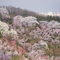 Photos: 花見山にて