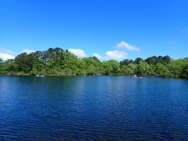 新緑の桧原湖