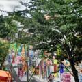 写真: パセオ通り七夕まつり