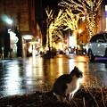 猫とイルミネーション