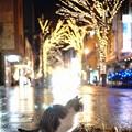 写真: 猫と一緒にイルミネーション見物