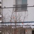 Photos: 電線の雀