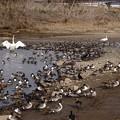 水量の少ない阿武隈川