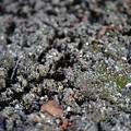 写真: 凍った地面