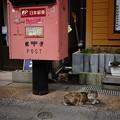 Photos: お昼寝したい猫ちゃん