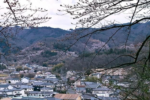 花見山の遠景