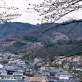 Photos: 花見山の遠景