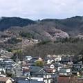 Photos: 花見山