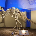 Photos: ヤンチュアノサウルス