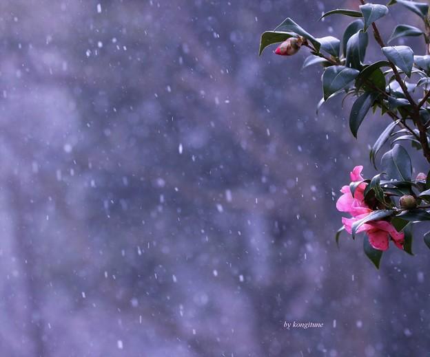 写真: また雪が・・・