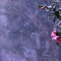Photos: また雪が・・・