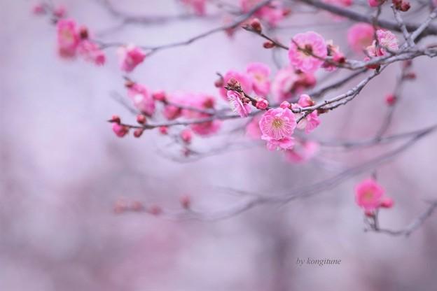 写真: 向春の候