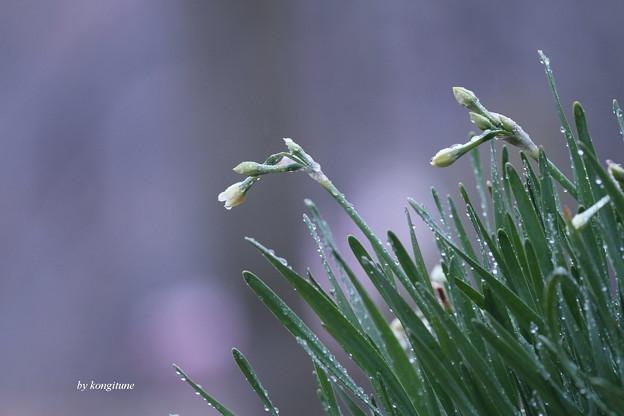 写真: 2月の雨