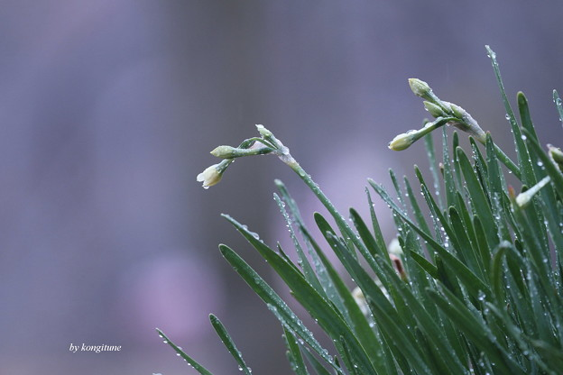 Photos: 2月の雨