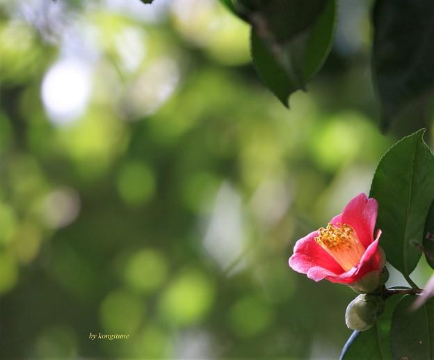 写真: 葉陰に