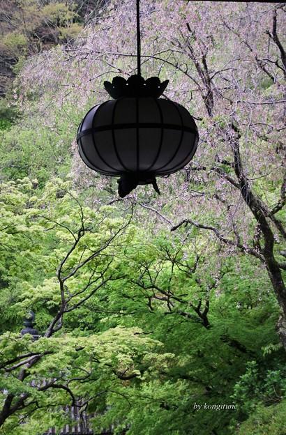 Photos: 雨の長谷寺