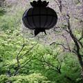 写真: 雨の長谷寺