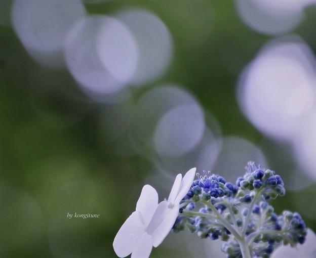 写真: 雨を待っ