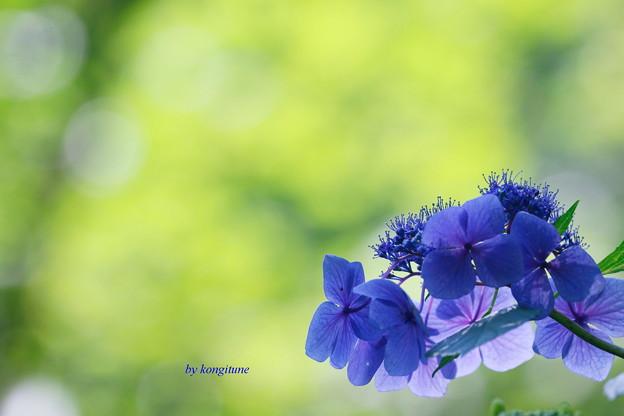 写真: 夏が来る