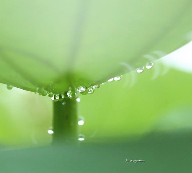 写真: 雨しずく