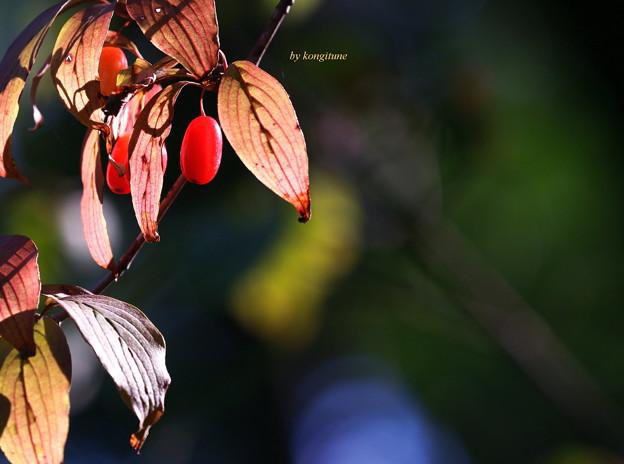 ここにも秋が