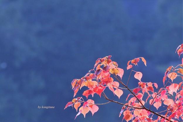 南京はぜに秋が来た