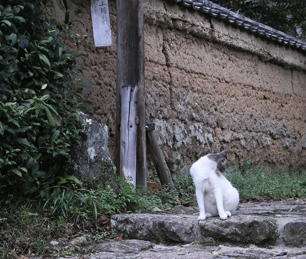 古寺のネコ君