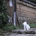 写真: 古寺のネコ君