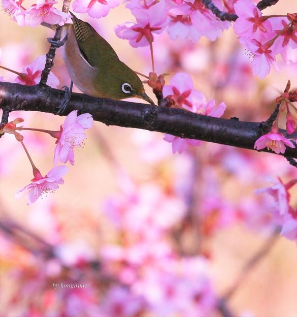 春ですね・・・
