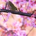 写真: 春ですね・・・