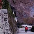 Photos: 春を配達