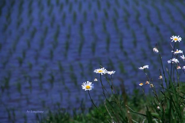 Photos: 薫風
