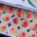 Photos: 今年も桃の季節が・・・