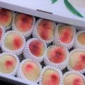 今年も桃の季節が・・・
