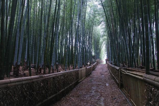 Photos: 竹の道