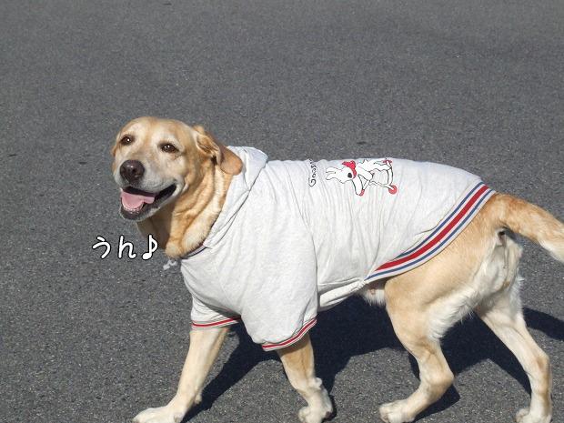 s-myu2008_1220(220)