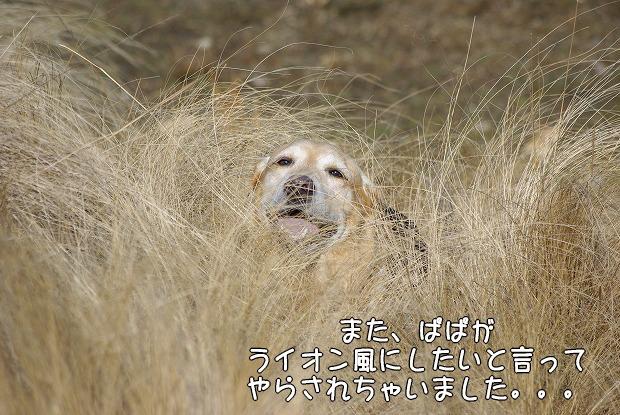 s-myu2009_0221(149)