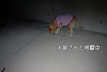 s-myu2009_0502(085)