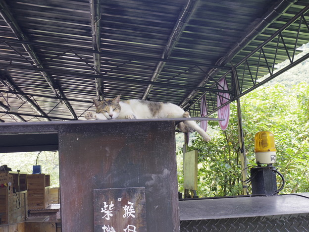2018/08/28 「猫村 Houtong」にて